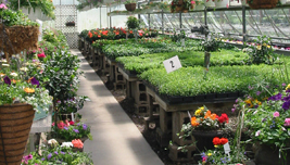 Didier Farms Greenhouse