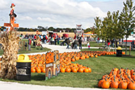 pumpkin patch southern il